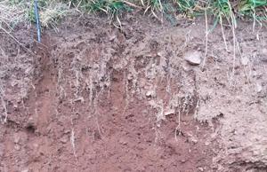 Root depth comparisons
